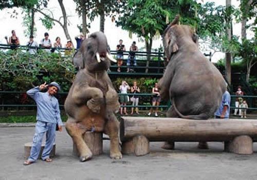 paket wisata mengendarai gajah