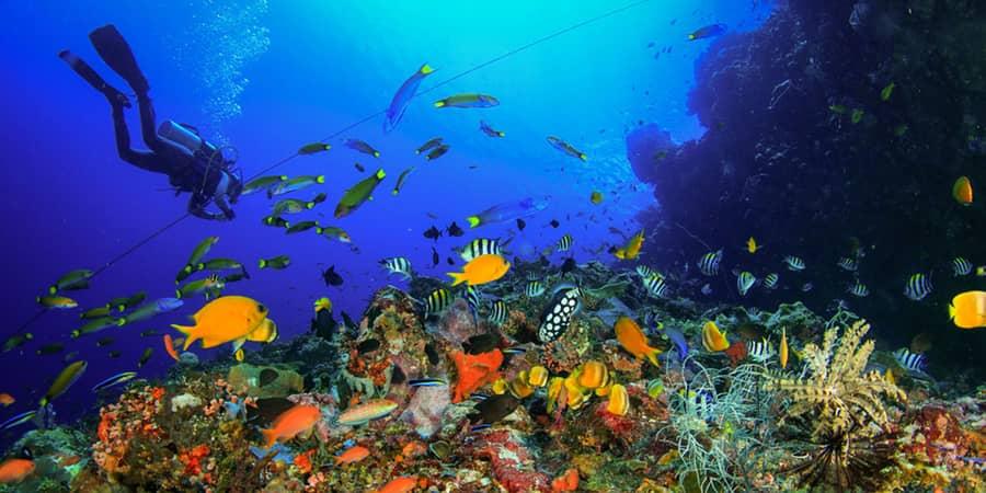 paket wisata diving bali
