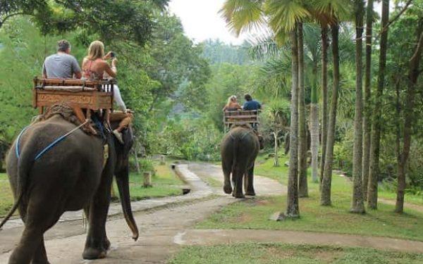 elephant camp bali