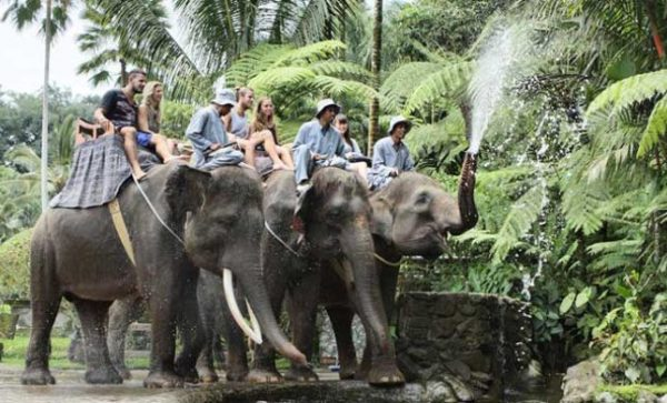 mason elephant ride